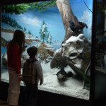 museo_zoologia_220